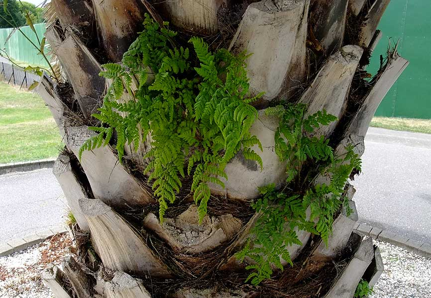 Ferns On Palms