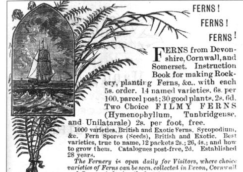 An advertisement for Edmund Gill's Victoria Fernery in Lynton, north Devon.