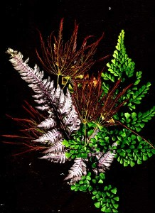 Frond scan #2 May 2013