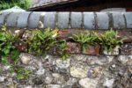 Longstock, The Peat Spade Inn