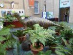 Iggy amongst the ferns