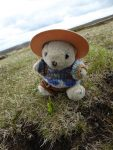 Scale bear sitting behind a moonwort spike