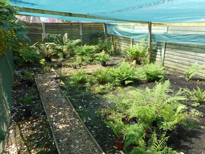 Ian Unsworth garden