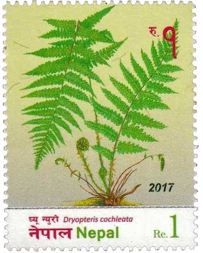 Dryopteris cochleata