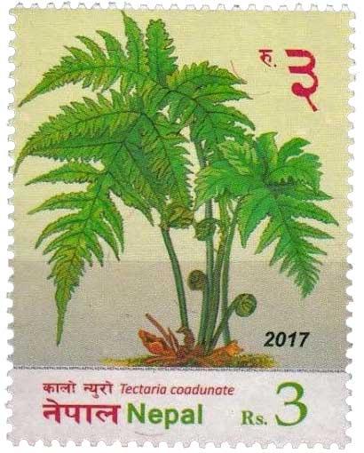 Tectaria coadunate