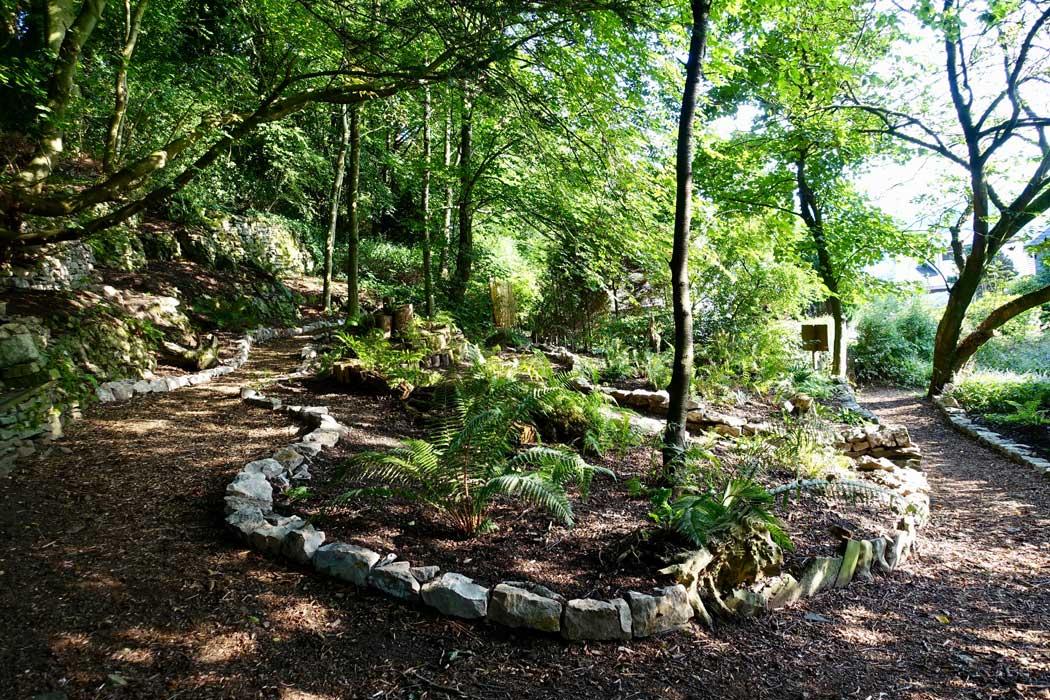 The Whitwell Fern Garden, August 2018