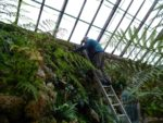 Robert dealing with the weeds at the top of the east wall.