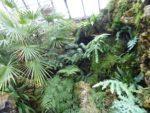 Cibotium menziesii, Phlebodiums and Epiphyllums