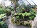 The Fernery looking south