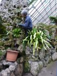 Planting a Paphiopedilum