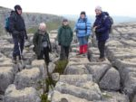 Chris, Laurence, Bruce, Carmen, Alison by the hybrid Polystichum on the top of Malham Cove. Thanks to Fred for the photo.