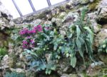 The Christmas cactus cleared of weeds