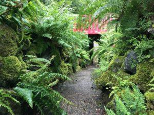 Fernery path