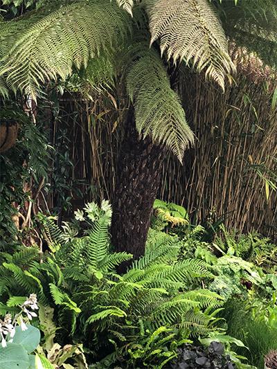 Picture of Matthew Reeve's garden