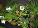 Some of the plants next to our Silver medal