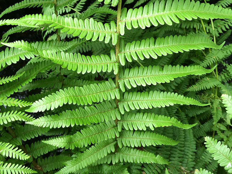 Close-up of frond