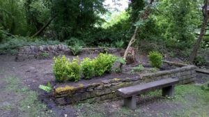 Shrubs planted to give some shelter, and the first ferns in place