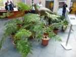 Iggy the young Iguanodon surrounded by ferns in the Atrium of World Museum Liverpool